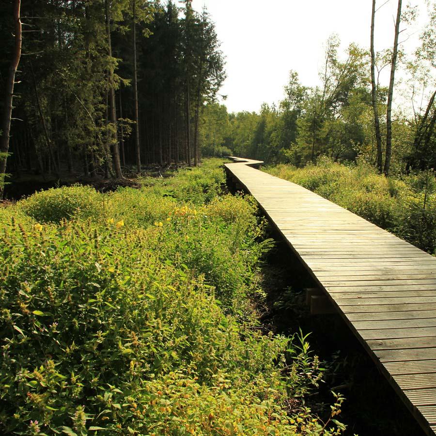 Bohlenweg Pfrunger-Burgweiler Ried